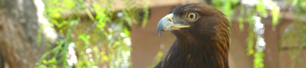 The California Raptor Center, Keeping them in the air